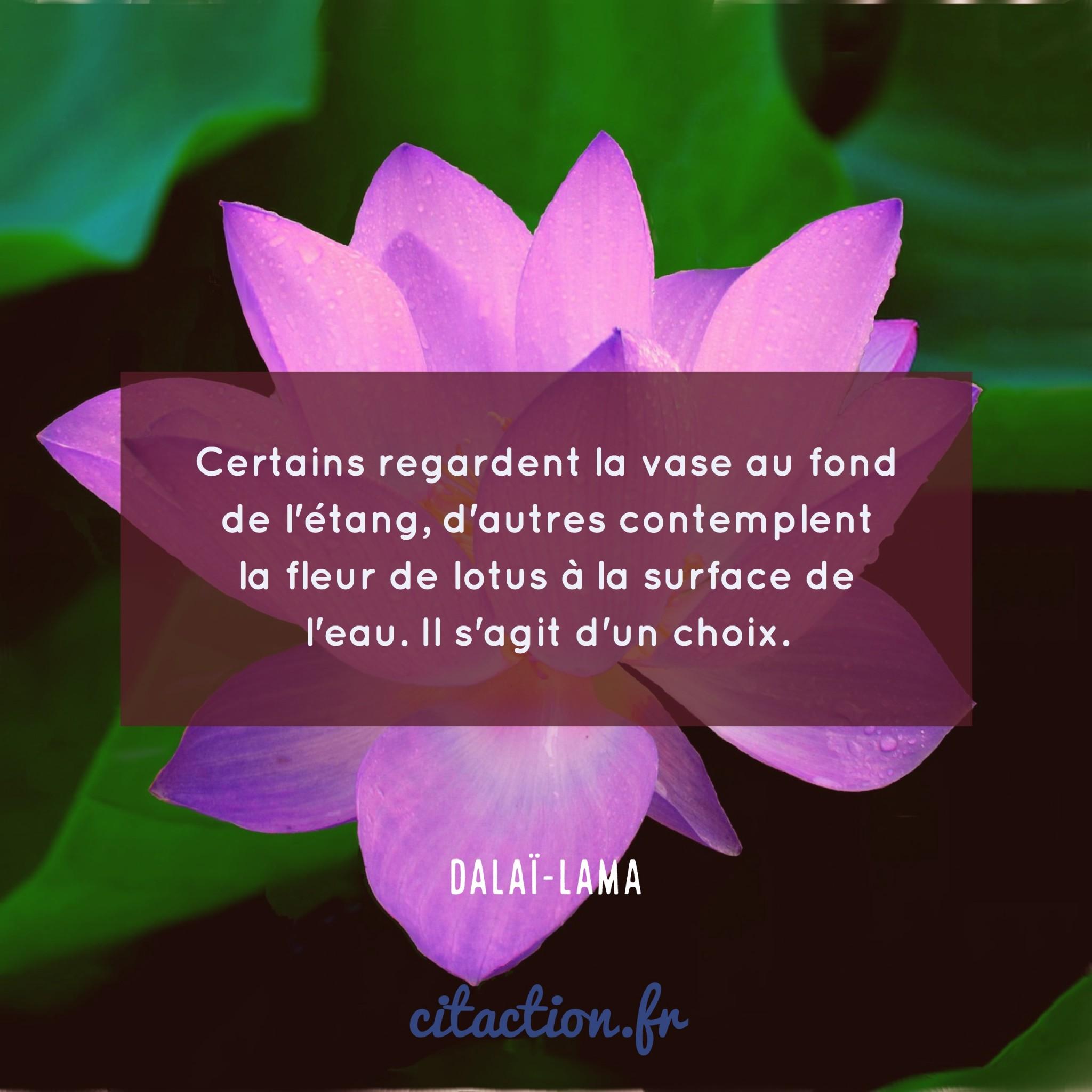 Certains regardent la vase au fond de l'étang, d'autres contemplent la fleur de lotus à la surface de l'eau.