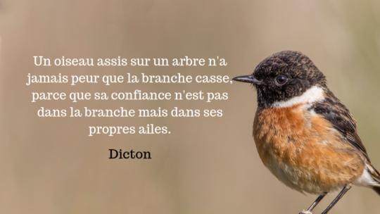 Un oiseau assis sur un arbre n'a jamais peur que la branche casse